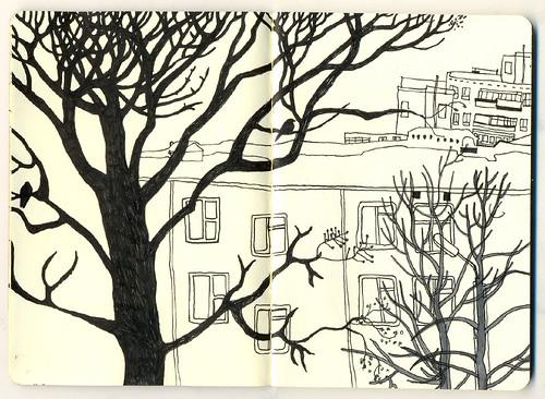 деревья. наброски