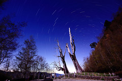 Stary night (Clonedbird  & Iris ) Tags:   startrail