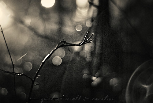 late night, Big Woods, bokeh and a branch