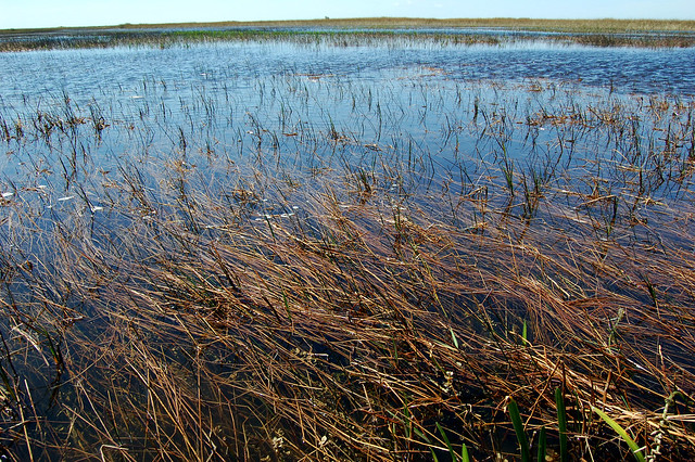 "everglades ""river of grass"""