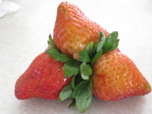 funny fruit. Funny Fruit 04. Mutant strawberry