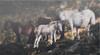 BELATE-Behorrak (tri) (ikimilikili-klik) Tags: wood horse forest mare euskalherria basquecountry navarre basoa nafarroa zaldia behorra belate nikond700 nikkor2470