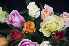 Bring It On Home To Me (Mona Hura) Tags: roses flower love home me rose loving petals sam sweet song it your bloom buds bud blooms bring lovin cooke samcooke 8907 bringitonhometome bringyoursweetlovin