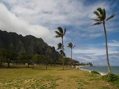 P4021228 (ymeng00) Tags: beach hawaii oahu kualoaregionalpark