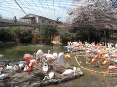 王子動物園20100410