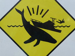 Best stick figure in peril ever (cyanocorax) Tags: water sign warning hawaii boat watch maui whale humpback 3wayicon
