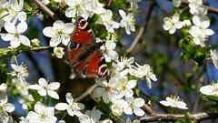 The Colours of Spring (Arkadious) Tags: potofgold macrolife natureselegantshots flickrunitedaward