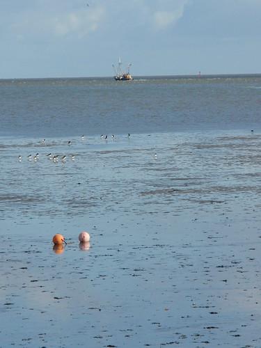 Cuxhaven -Fischer