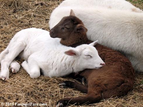 Snuggle Up (3)