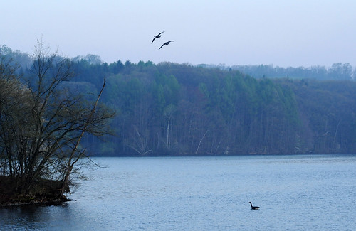 Come join us - birds flying in Tomhannock Reservoir, Troy NY