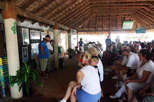 Acapulco - Sea Turtle Orientation