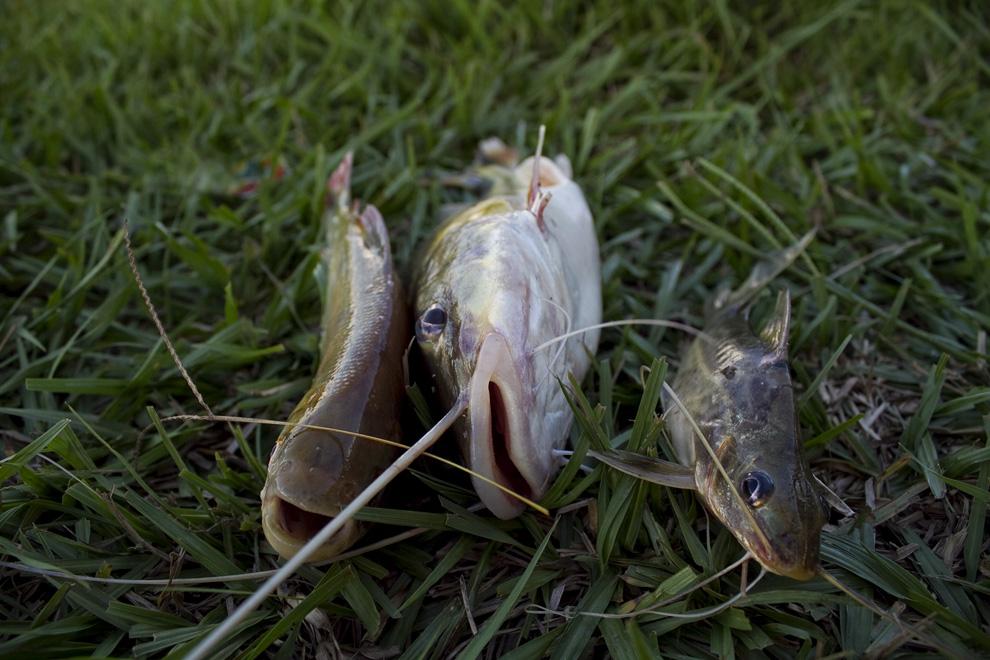 3 Amigos que iran a parar al piracaldo (caldo de pescado) para la cena. (Puerto La Niña, San Pedro, Paraguay - Tetsu Espósito)