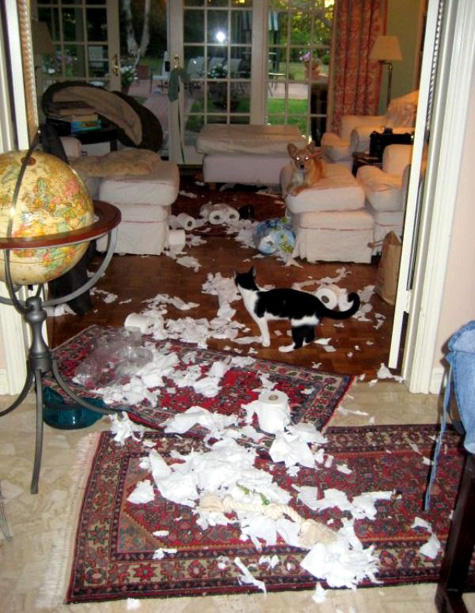Dog and cat make a big mess in the house!