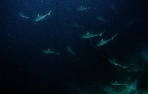 Tubbataha Underwater Wonder