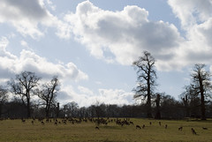 Deer at Studley Royal (swindy1) Tags: yorkshire deer fountains ripon studley