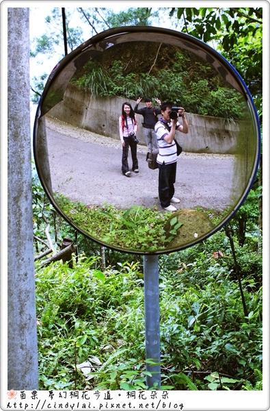 20100501夢幻桐花步道_080