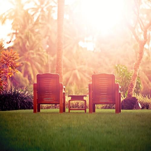 Summer / landscape / sunset / light / rainforest / tropical / palm tree / sun light