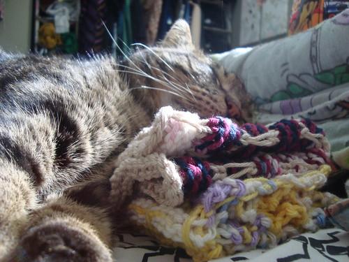 rupert cuddles the dishcloths i made