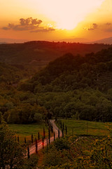 The cypress road - La strada di cipressi (Robyn Hooz) Tags: road sunset mountains montagne canon strada tramonto tuscany grapes cypress 18 toscana 50 ef arezzo viti cipressi mywinners platinumheartaward 1000d