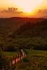 The cypress road - La strada di cipressi (Robyn Hooz) Tags: road sunset mountains montagne canon strada tramonto tuscany grapes cypress 18 toscana 50 ef arezzo viti cipressi mywinners platinumheartaward 1000d