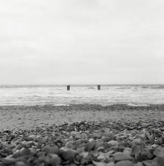 Divers 6x6 10 (YannickH) Tags: sea bw mer 6x6 film beach sable plage yashica argentique coquillages zeelande yannickh yannickhnet