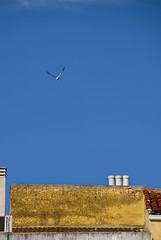 Sometimes, I wish I could Fly (Palentino) Tags: roof sky buildings fly edificios dove paloma cielo tejados chimeny chimenea palencia volar