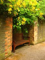 The Hill Garden