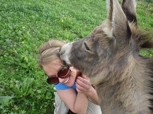 donkey_kisses