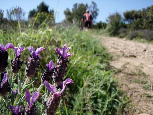 Trail des Maures 2010 (85)
