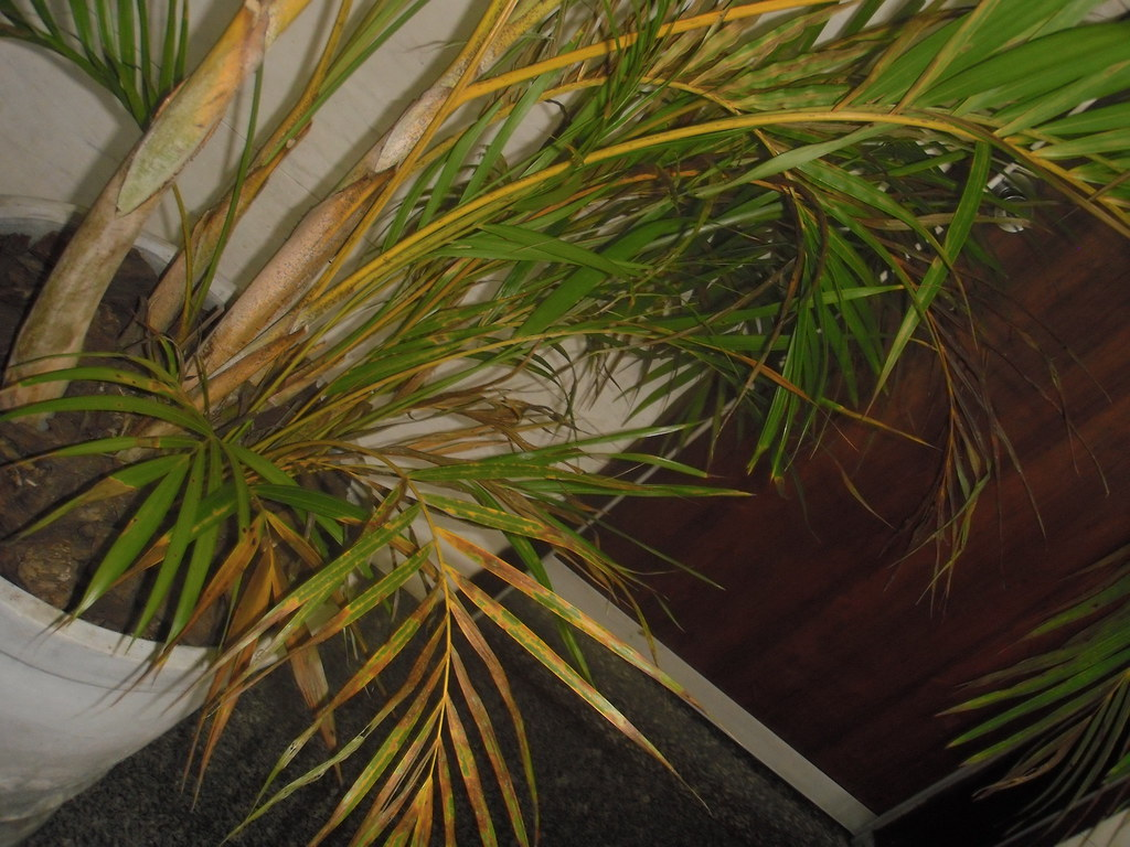 Planta maltratada no corredor da CMSP