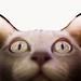 UNIVERSOS PARALELOS: El gato de Schrodinger