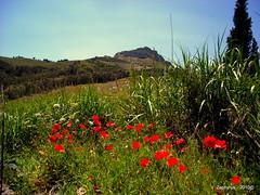 sentieri di persefone (guido fasanaro) Tags: enna sicilia proserpina demetra