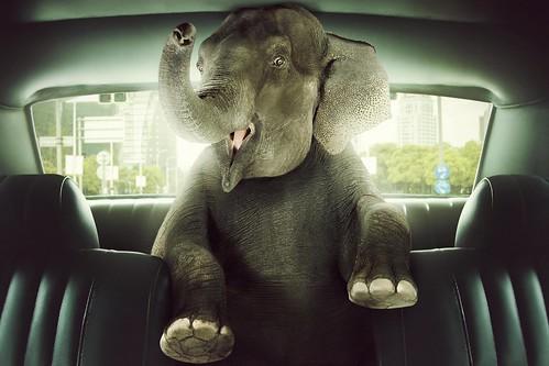 [フリー画像] 動物, 哺乳類, ゾウ科, グラフィックス, フォトアート, 象・ゾウ, 201006121100