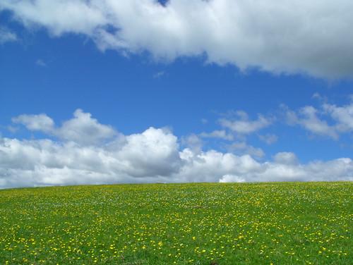 [フリー画像] 自然・風景, 草原, 雲, 201006042300