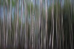 birken surreal (HaPe_Gera) Tags: trees photoshop germany surrealism surreal digiart birch birken