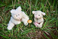 Welcome to the Family Zoey Elizabeth (Singing With Light) Tags: baby sheep pentax welcome kiwi magnet jjp respirator k200d bahbahra fridgetoy hospitaljjpk200dpentax