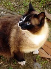 L'orsino di via Aniense (Bagoo Pex) Tags: animal cat felino gatto animale