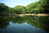 新緑の池端