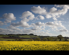 The Yellow Field (Chee Seong) Tags: uk blue light shadow sky plant flower tree field grass yellow clouds canon evening scotland spring soft view rape filter 09 lee vista brassica rapeseed westlothian brassicaceae napus oilseed rapa gnd canon2470mm rappi 5dm2