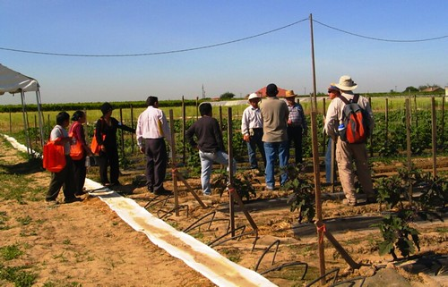 Hmong farmers participate in the Clean Air Farming Workshop at Cherta Farms owned by Txexa Lee (center, in white hat) in Del Rey, California, where air quality concerns impact human health and choice of farming practices.