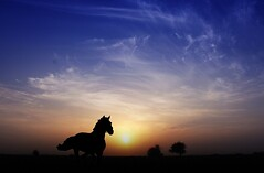 Freedom (MJ ♛) Tags: blue sky horse sun animal animals silhouette sunrise canon landscape eos freedom silhouettes free 1855mm efs 2010 40d