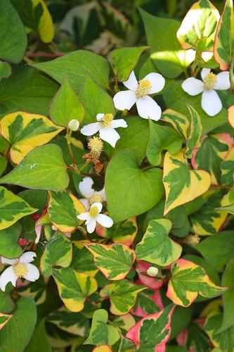 Mongero Garden
