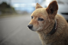 friendly guy (Clark Tanaka) Tags: 200 ef35mmf14lusm canoneos5dmarkii f16