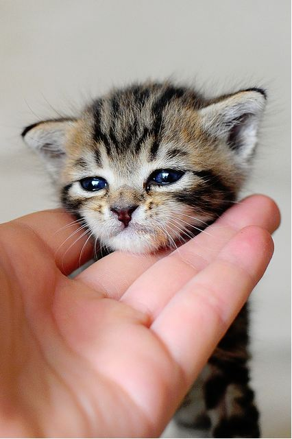 cute rescued tabby kitten