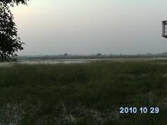 Wetland- Sarsai Nawar