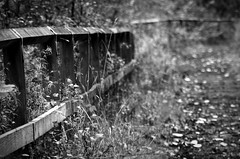 (andrewlee1967) Tags: fence dof bokeh bw blackandwhite canon50d sigma18200mm andrewlee1967 autumn andrewlee
