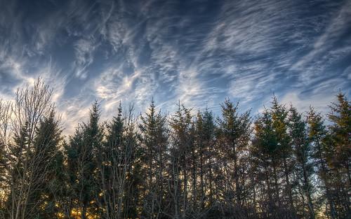 フリー写真素材, 自然・風景, 樹木, 森林, HDR,