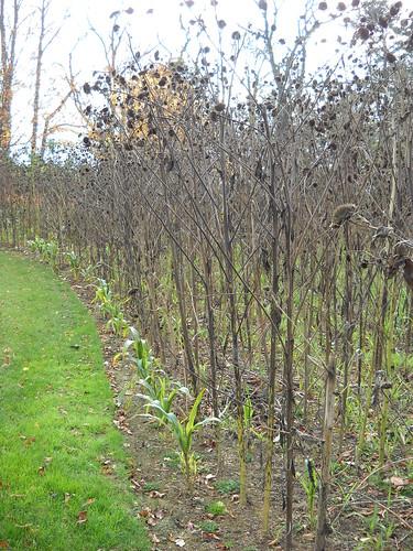 Longwood October 2010 121