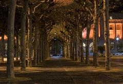 Tunnel of Trees (Chip Shotz) Tags: sanfrancisco california ca trees northerncalifornia night prime bay nikon cityhall illuminated 35mmf18 d40 civiccenterplaza nikond40 vftw