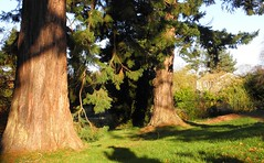 Light, shadow and trees (IrenicRhonda) Tags: november plant game public geotagged scotland highlands unitedkingdom scottish highland pre 2010 gbr scottishhighlands strathpeffer gamewinner pregamewinner geo:lat=5758882833 westerrossstrathpefferandlo westerrossstrathpefferandlochalshward srathpheofhair 10novemebr2010 geo:lon=453490667